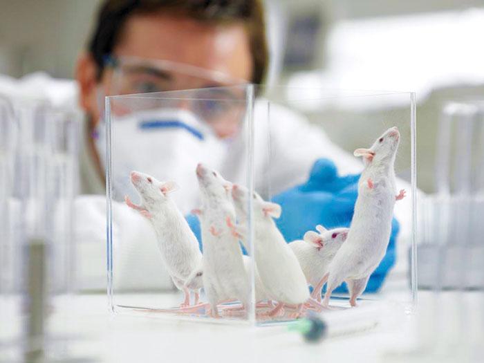 mice-laboratory