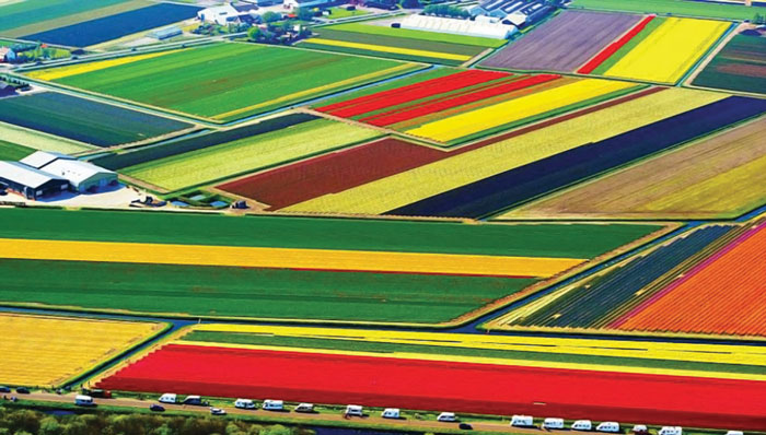 aerial-photography-tulip-fields
