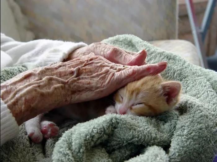 lifemagazinegr-pettherapy-animaltherapy-zwakia-giatroi-therapia-me-zwaa2
