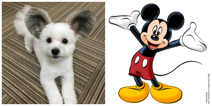 lifemagazinegr_mickey_mouse_dog_8
